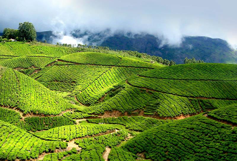 Kerala Hideaway Tour